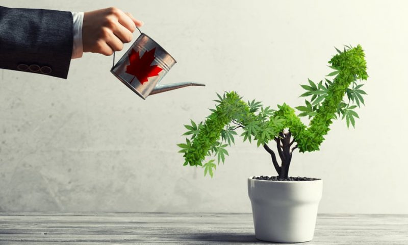 get a grow license in canada